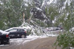 GALERIE FOTO: Crengi căzute peste mașinile parcate pe o stradă din Cluj-Napoca