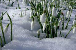 Vine Primăvara? Vezi cum va fi vremea în următoarele zile!