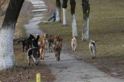 O fată de 16 ani din Câmpia Turzii, victimă a câinilor vagabonzi