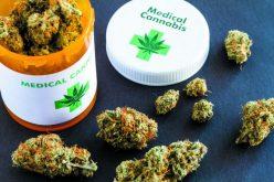 Studiu: Consumul de cannabis, asociat cu un nivel mai mare al fertilității în cazul bărbaților