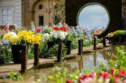 Ghiveci inteligent, inventat de un licean, udă singur florile cu apa din umiditatea aerului