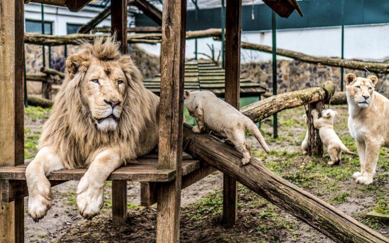 VIDEO: Cea mai frumoasă grădină zoologică din Europa, la doi pași de granița cu România! Românii iau cu asalt destinația turistică din Ungaria