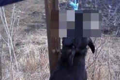IMAGINI ȘOCANTE la Câmpia Tuzii. Câine atârnat de limbă de un copac, în fața copiilor UPDATE