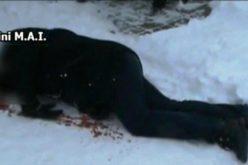 Dezvăluiri șocante. Cât costă un asasinat comandat în România.