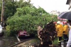 VIDEO: O rupere de nori în Baia Mare a făcut prăpăd. Copaci smulși din rădăcină