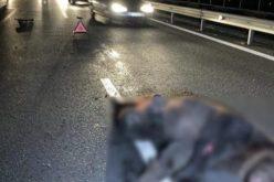 FOTO   Un urs a murit după ce fost lovit de o mașină pe autostrada A3 Turda – Borș. ATENȚIE!!!- IMAGINI CARE VĂ POT AFECTA EMOȚIONAL