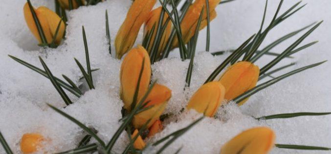 Vremea se răcește brusc în ultimele zile din martie. Minime de -9 grade, lapoviţă și ninsori